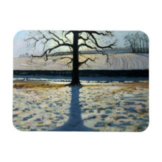 Tree and Shadow Calke Abbey Derbyshire Rectangular Photo Magnet