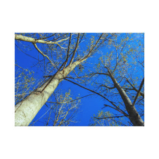 tree and the sky canvas print