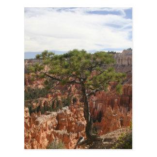 Tree at Bryce Canyon US Postcard