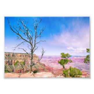 Tree at Grand Canyon's Edge | Photo Print