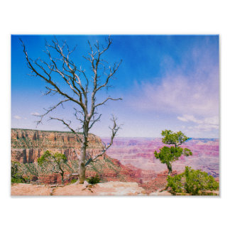 Tree at Grand Canyon's Edge | Poster