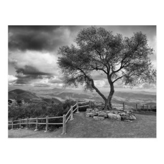 Tree at the top of the hill post cards