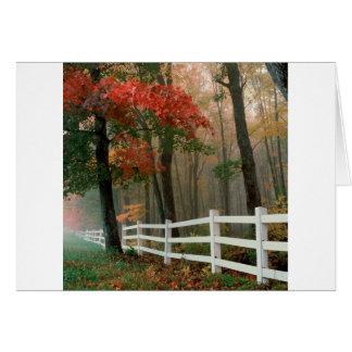Tree Autumn Splendor Greeting Cards