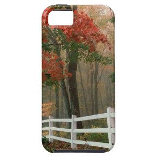 Tree Autumn Splendor iPhone 5/5S Cover