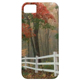 Tree Autumn Splendor iPhone 5 Case