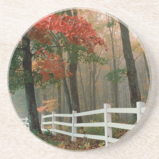 Tree Autumn Splendor Beverage Coasters