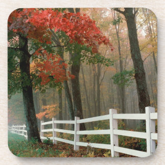 Tree Autumn Splendor Coaster