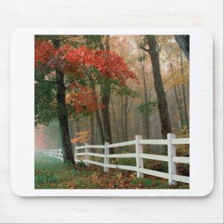 Tree Autumn Splendor Mouse Pads