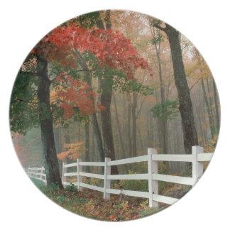 Tree Autumn Splendor Plates
