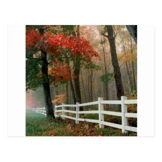 Tree Autumn Splendor Postcard