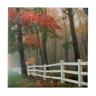 Tree Autumn Splendor Ceramic Tile