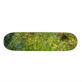 Tree Balboa Park Cactus Skateboard Deck