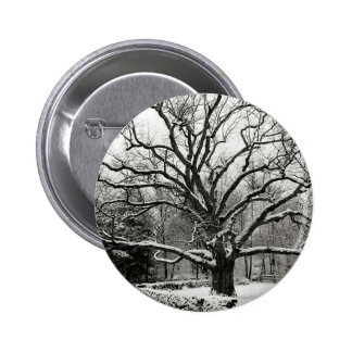 Tree Bedford Oak New York City 6 Cm Round Badge