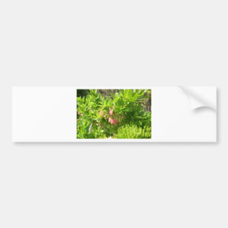 Tree Blooms - Vaccinium Cylindraceum Bumper Sticker