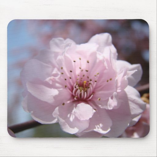 TREE BLOSSOMS MOUSEPADS Pink Blossoms Mousepad