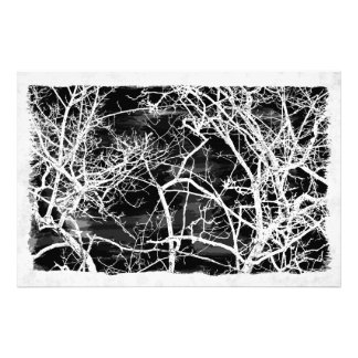Tree branches on black background photo print