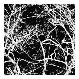 Tree branches on black background photographic print