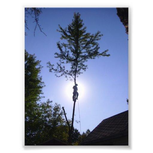 tree climber photo art