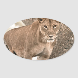 Tree-climbing lion, Uganda Africa Oval Sticker