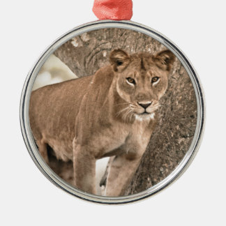 Tree-climbing lion, Uganda Africa Silver-Colored Round Decoration
