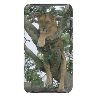 Tree climbing lioness (Panthera leo), Queen iPod Touch Cases