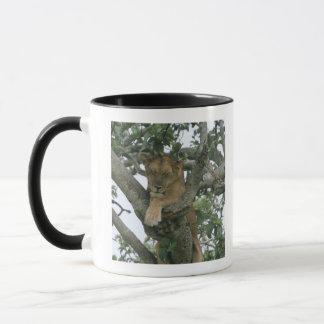 Tree climbing lioness (Panthera leo), Queen Mug