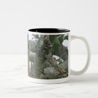 Tree climbing lioness (Panthera leo), Queen Two-Tone Coffee Mug