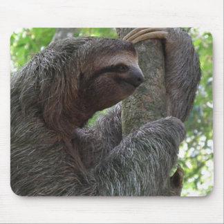 Tree Climbing Sloth Mouse Pad