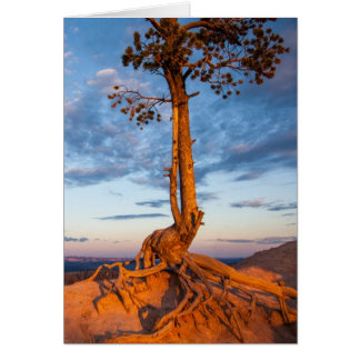 Tree Clings to Ledge, Bryce Canyon National Park Card