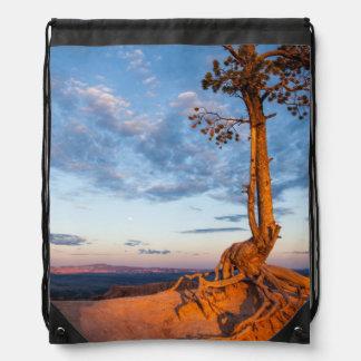 Tree Clings to Ledge, Bryce Canyon National Park Drawstring Backpacks