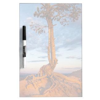 Tree Clings to Ledge, Bryce Canyon National Park Dry Erase Board