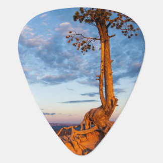Tree Clings to Ledge, Bryce Canyon National Park Guitar Pick