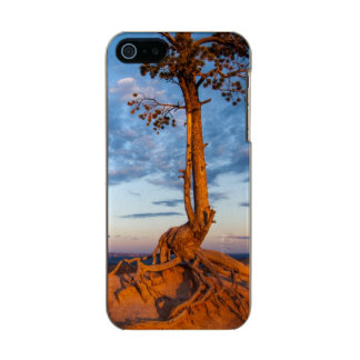 Tree Clings to Ledge, Bryce Canyon National Park Incipio Feather® Shine iPhone 5 Case