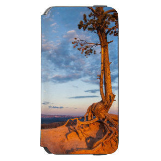 Tree Clings to Ledge, Bryce Canyon National Park Incipio Watson™ iPhone 6 Wallet Case