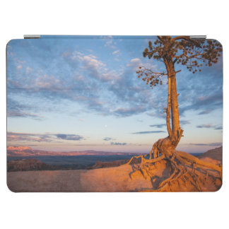 Tree Clings to Ledge, Bryce Canyon National Park iPad Air Cover