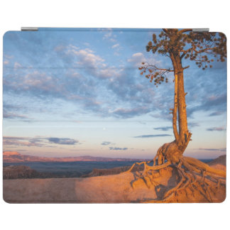 Tree Clings to Ledge, Bryce Canyon National Park iPad Cover