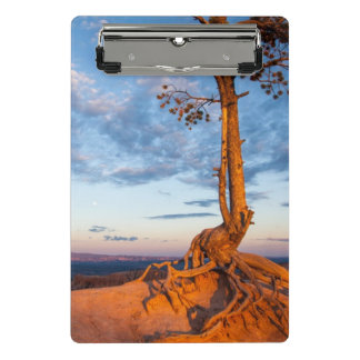 Tree Clings to Ledge, Bryce Canyon National Park Mini Clipboard