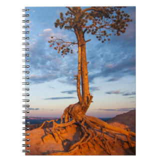 Tree Clings to Ledge, Bryce Canyon National Park Notebook