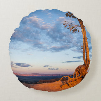 Tree Clings to Ledge, Bryce Canyon National Park Round Cushion