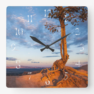 Tree Clings to Ledge, Bryce Canyon National Park Square Wall Clock