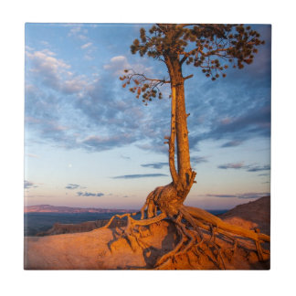 Tree Clings to Ledge, Bryce Canyon National Park Tile