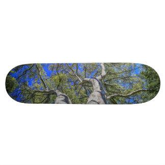 Tree Crown Skateboards