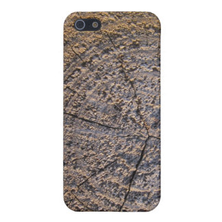 Tree Cut Hard Shell Case for iPhone 4 4S