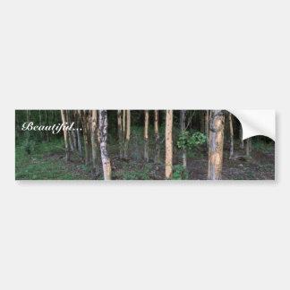 Tree damage by mammals in Refuge Bumper Sticker
