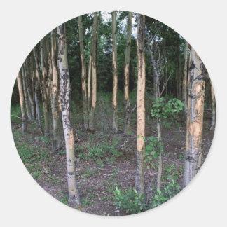 Tree damage by mammals in Refuge Round Sticker