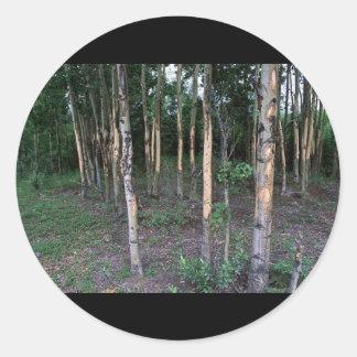Tree damage by mammals in Refuge Sticker