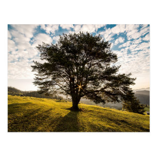 Tree, dawn. Beautiful nature scenery Postcard