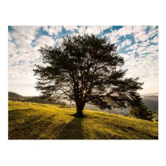 Tree, dawn. Beautiful nature scenery Postcard