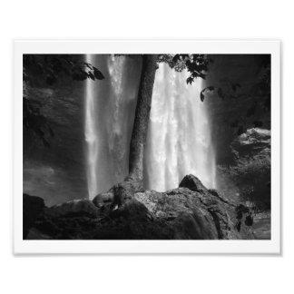 Tree Falls B&W Photo Art