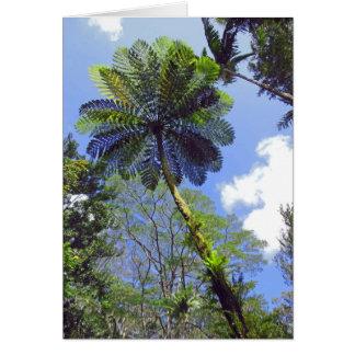 Tree Fern Card